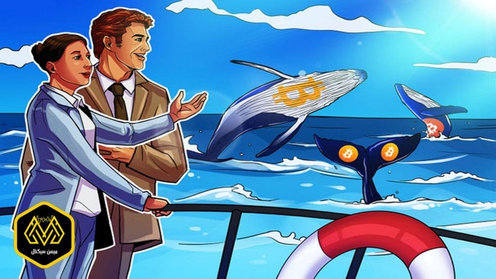 همراه شدن نهنگها با خریداران خرد در خرید بیت کوین